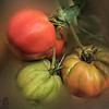 KSU Hickory Grove Farm - tomatoes