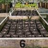 KSU Hickory Grove  - soil blocks
