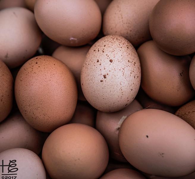 Hickory Grove Farm - farm-fresh eggs