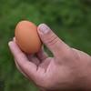 Hickory Grove Farm - 20 second egg