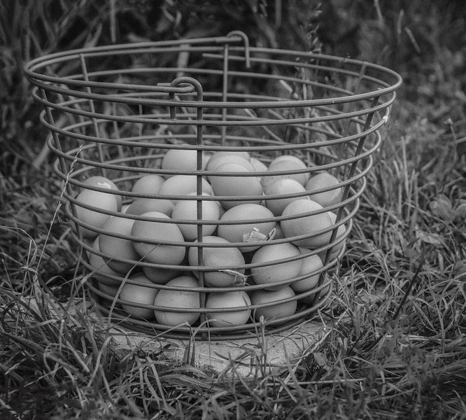 Hickory Grove Farm - eggs in backet