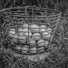 Hickory Grove Farm - eggs in backet
