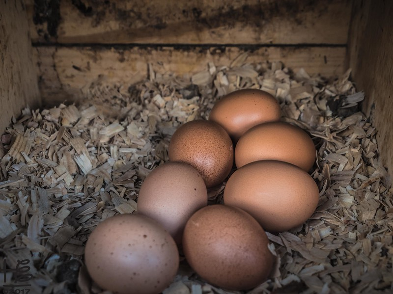 Hickory Grove Farm - eggs