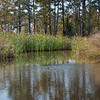 HGF pond