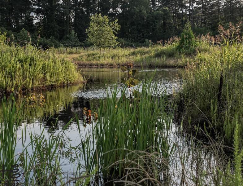 Hickory Grove Farm - pond