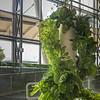 Hydroponic lettuce design