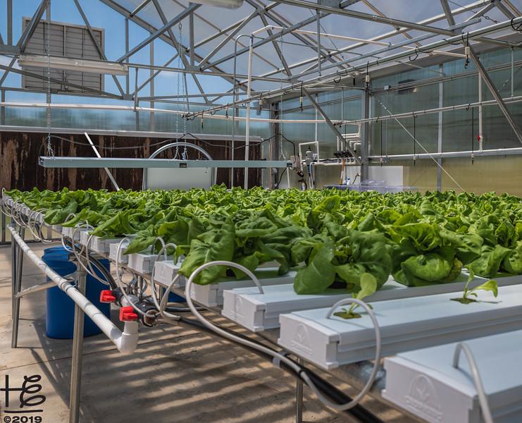 Horizontal hydroponics garden