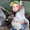 Four-year old Westen Royse, son of Tyler and Brittney Royse, is pictured with his chicken named Big Ol' Daddy. <br /> Submitted by  Brittney Royse