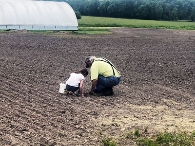 Bryleigh Doerfler and Pop Phil Leonard check for beans spouts in Ingraham.  Submitted by Kathy Leonard
