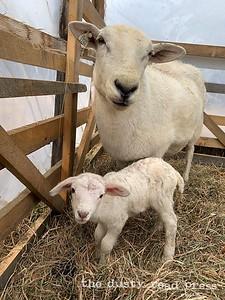 Everyday Farm Mama and Baby