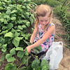 "Niece Zoey picks green beans at Nana's garden in Ingraham. ""Never too young to start them out especially when they are so much lower to the ground."" <br /> Submitted by Kathy Leonard"