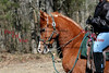 Dyynamic AA (2006 Trail Ride) :