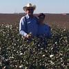 2016 cotton crop Drip Irrigation