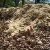 TLW compost pile