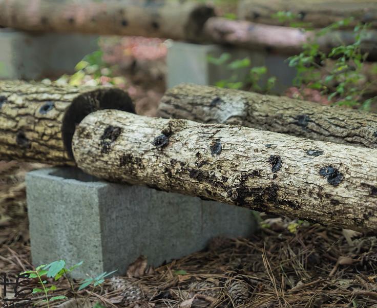 KSU Hickory Grove  -  mushroom logs