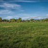 Fallow field with ducks