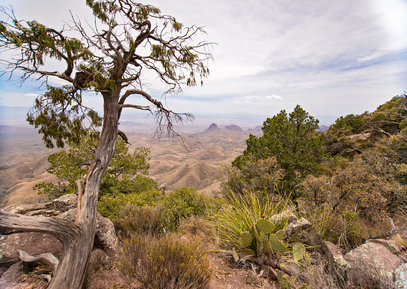 View from South Rim Trail in Big Bend National Park.