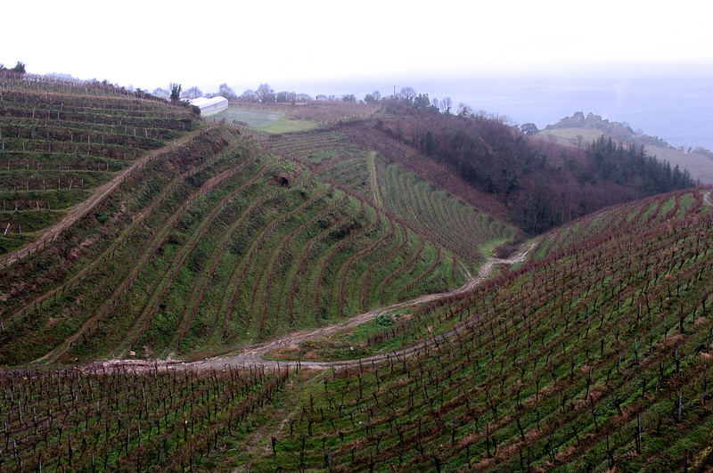 Txakoli Vineyards on the Atlantic