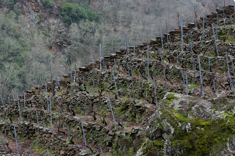 The vineyards of Ribeira Sacra.<br /> Pentax K20D with DFA 100mm lens)
