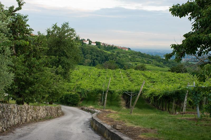 Valpolicella vineyards at sunset.