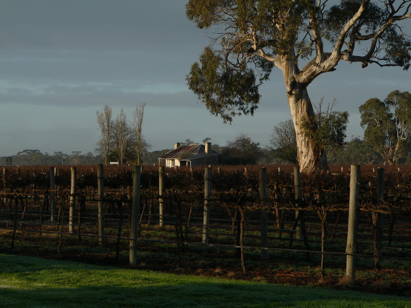 Early morning in the vineyards of Australia. Panasonic FZ20.