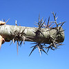 Lesson #9 on Cutting a Thorn Tree