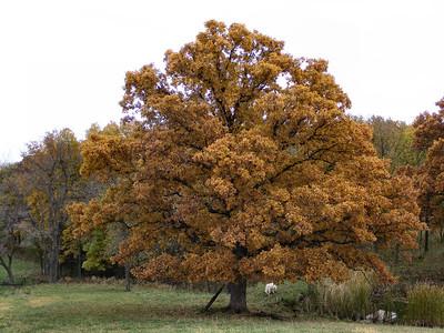 Debs Tree
