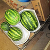 """I """"Growed"""" Some Watermelons This Year"""