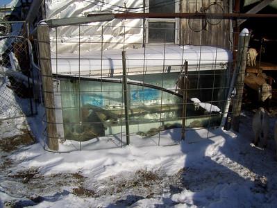 Solar Stock Tank
