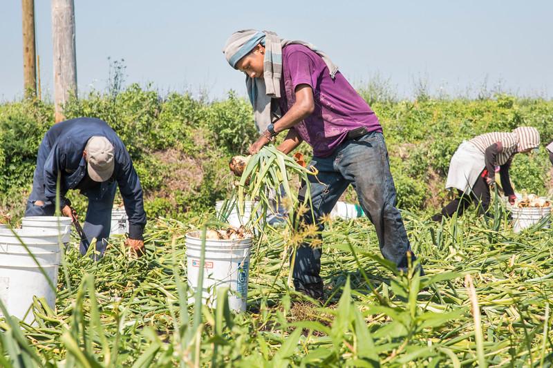 erbfarmworker10