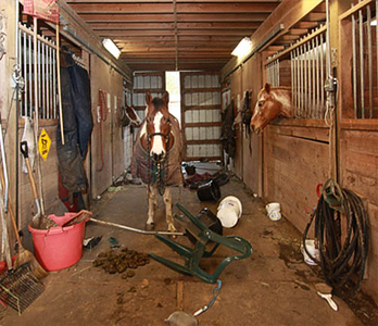 Max trashed the barn aisle on evening after escaping his paddock.