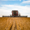 LeBlanc-Combining Soy Beans-6439