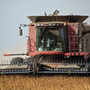 LeBlanc-Combining Soy Beans-6594