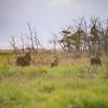 LeBlanc-Moose-7032