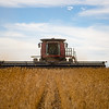 LeBlanc-Combining Soy Beans-6452