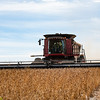 LeBlanc-Combining Soy Beans-6384