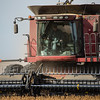 LeBlanc-Combining Soy Beans-6604