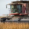 LeBlanc-Combining Soy Beans-6618