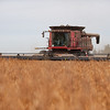 LeBlanc-Combining Soy Beans-6428
