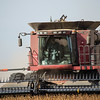 LeBlanc-Combining Soy Beans-6602