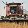 LeBlanc-Combining Soy Beans-6655