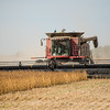 LeBlanc-Combining Soy Beans-6583