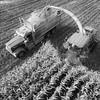 LeBlanc-Corn Silage Aerial-8847-Edit-2
