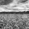 LeBlanc-Corn Silage-6067-Edit