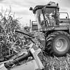LeBlanc-Corn Silage-6125-Edit