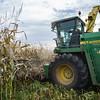 LeBlanc-Corn Silage-6146