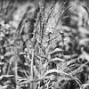 LeBlanc-Corn Silage-6096-Edit