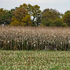 LeBlanc-Corn Silage-6313