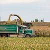 LeBlanc-Corn Silage-6334