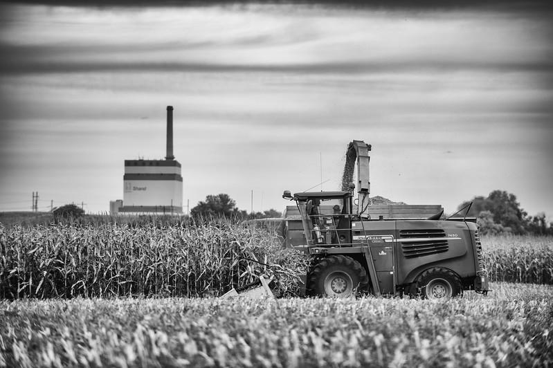 LeBlanc-Corn Silage-6229-Edit